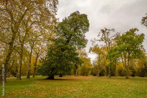 Fototapety, obrazy: Londra, Regno Unito