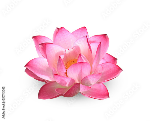 Acrylic Prints Lotus flower Lotus flower on white background