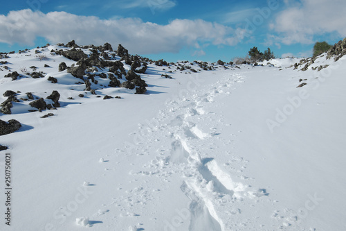 Vászonkép  Traces Of Hiker With Snowshoes Prints In The Fresh Snow