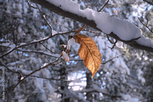 Autumnal Leaf In A Snow Covered Forest Canvas-taulu