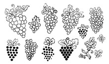 Vector Hand Drawn Illustration Of Grapes Silhouette On White Background.