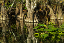Everglades National Park, Florida USA