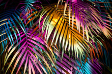 Beautiful, Many Colorful Palm Leaves Forming A Background