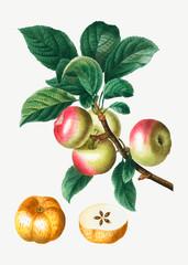 Panel Szklany Do jadalni Apples on a branch