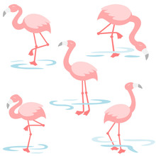 Flamingo Walking In The Pond
