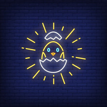 Shining Chick Hatching From Egg Neon Sign