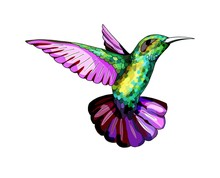 Small Hummingbird. Exotic Trop...