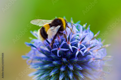 Bumble Bee Fotobehang