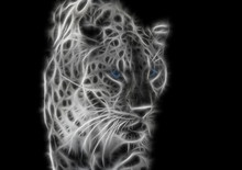 Black-white Fractal Wild Leopard With Blue Eyes On A Contrasting Black Background