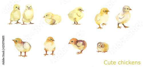 Cute yellow chickens.Funny farm.10 chickens on white background. Fototapeta