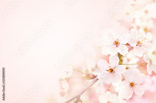 Deurstickers Kersenbloesem Spring blossom/springtime cherry bloom, bokeh flower background, pastel and soft floral card, toned