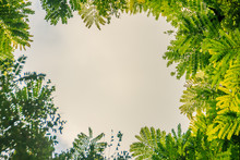 Green Leaves Frame With Dramatic Sky Background And Middle Copy Space For Text. Nature Frame Of Green Leave Branches On Cloudy Sky Background. Frame Of Green Leaves In The Forest Against The Blue Sky.