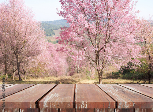 Montage in der Fensternische Lachs Empty brown wood table for display product and beautiful pink sakura flower nature background.