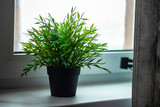 potted plant on the window