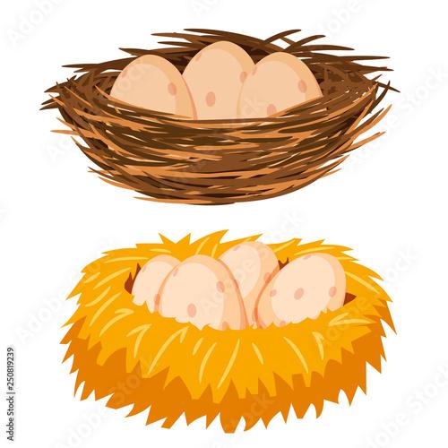 Fototapeta Eggs in the nest obraz