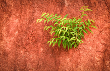 Young Green Plant Tree Growing On Soil Wall In Nature Red Dirt Ground Background