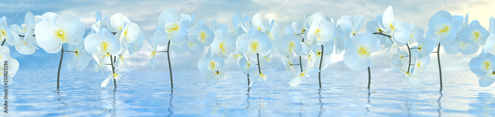 Fototapety, obrazy: panorama of white orchids over the water surface with reflections, 3d illustration