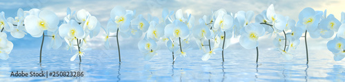 panorama of white orchids over the water surface with reflections, 3d illustration