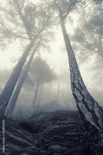 Valokuva  Foggy forest landscape