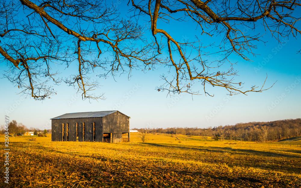 Fototapeta Tobacco Barn In a Field