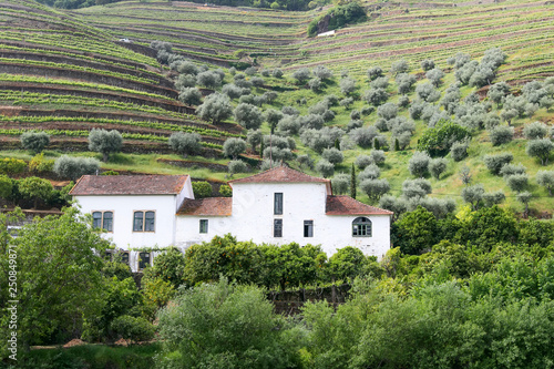 Fotografie, Obraz  A winery in Douro Valley, Portugal, as seen from the Douro river.