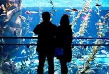 People Looking Into The Pacific Kelp Tank Inside Ripley's Aquarium Of Canada, Toronto, Ontario