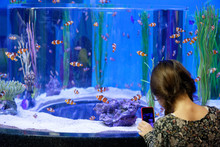 A Young Girl (8yrs Old) Taking Photos Of Clownfish With A Cellphone Inside Ripley's Aquarium Of Canada, Toronto, Ontario