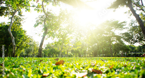 Fototapeta Park with bright grass and trees, sun glare. Relaxing fitness background. Spring-summer wallpaper. Low angle shooting. obraz na płótnie