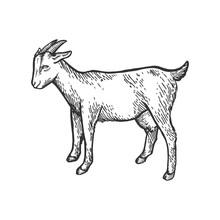 Goat Farm Animal Sketch Engrav...
