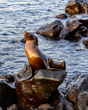 Sea Lion Sunbathing