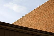 Seagulls On Building