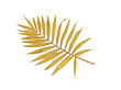 Tropical golden leaf palm tree on white background with space for text. Top view, flat lay