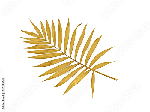 Tropical golden leaf palm tree on white background with space for text Fototapeta