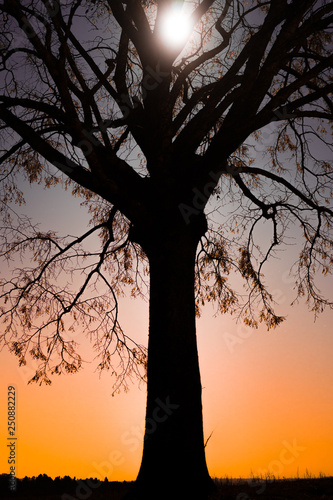 tree silhouette with cosmic background at night