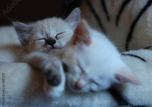 Fototapety, obrazy: Sleeping