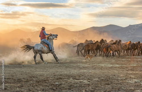 Foto auf AluDibond Grau the cowboy who runs a herd of wild horses
