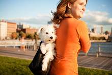 Woman Carrying Her Dog In Purse