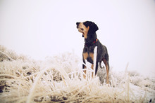 Dog Standing In Frozen Meadow