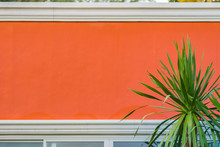 Orange Wall With Green Leaves Background. Green Leaf On The Orange Cement Wall With Copy Space For Text.