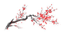 Realistic Sakura Blossom Isolated On White Background.