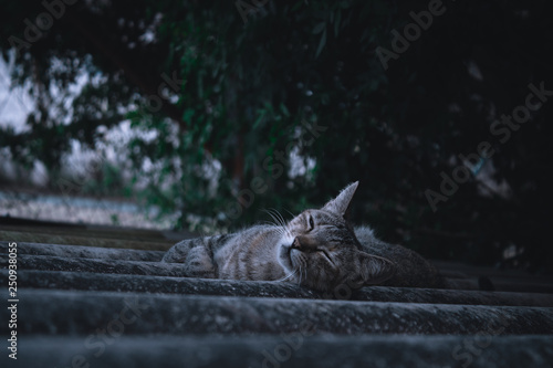 Tuinposter Purper Pet feline sleeping