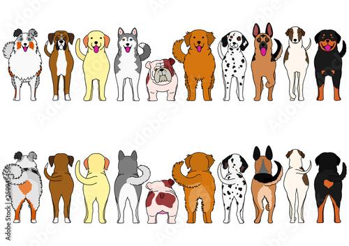 Fotografia dogs breed border set with color