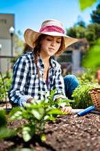 Young Woman Working In Vegetable Garden