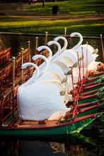 Swan Boats In The Boston Public Garden In Summer