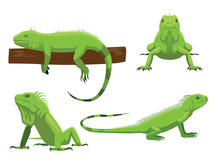 Cute Green Iguana Poses Cartoo...