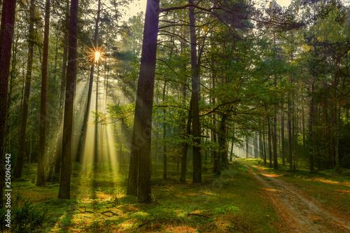 Foto auf Leinwand Straße im Wald jesień na Mazurach