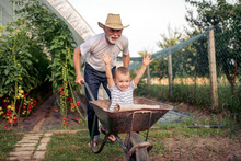 Grandfather And His Grandson In Greenhouse
