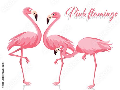 Canvas Prints Flamingo Bird Pink flamingo isolated on white background
