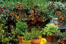 Balcon Fleuri Avec Des Légume...