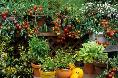Photo Balcon fleuri avec des légumes et plantes aromatiques